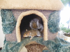Munchkin the squirrel from Tompkins County Recycling Center